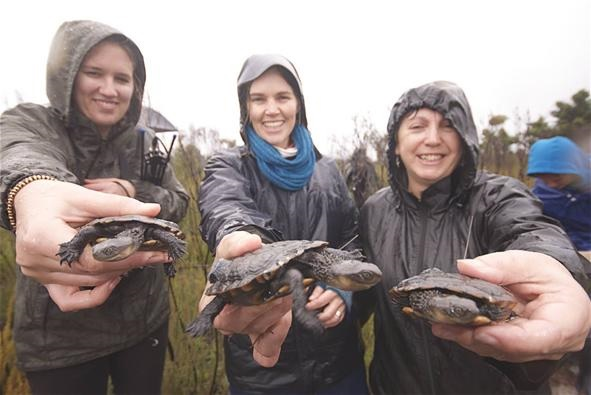 Western swamp tortoises move to a cool new home