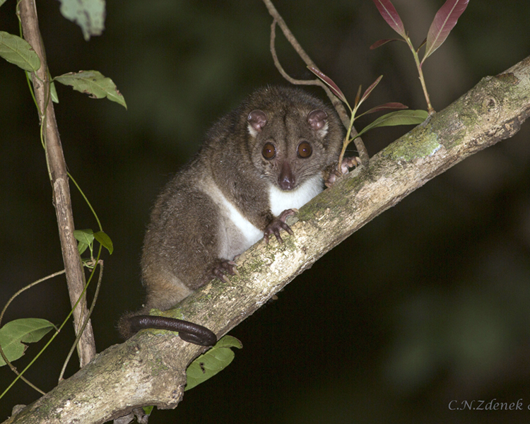 Call for photos for new possum monitoring app
