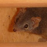 Testing the effectiveness of nest boxes for threatened species