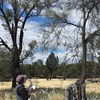 Adaptive management of endangered Buloke woodlands