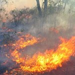 Managing fire regimes to save threatened flora and fauna