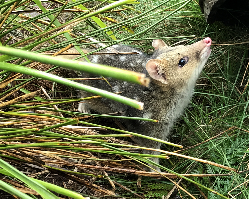Threatened species returning to Booderee National Park