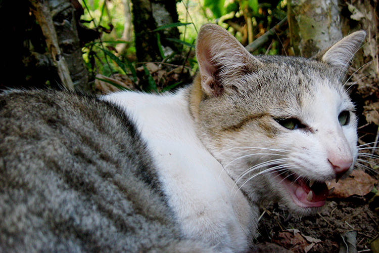 Cat eradication to help threatened species on Christmas Island