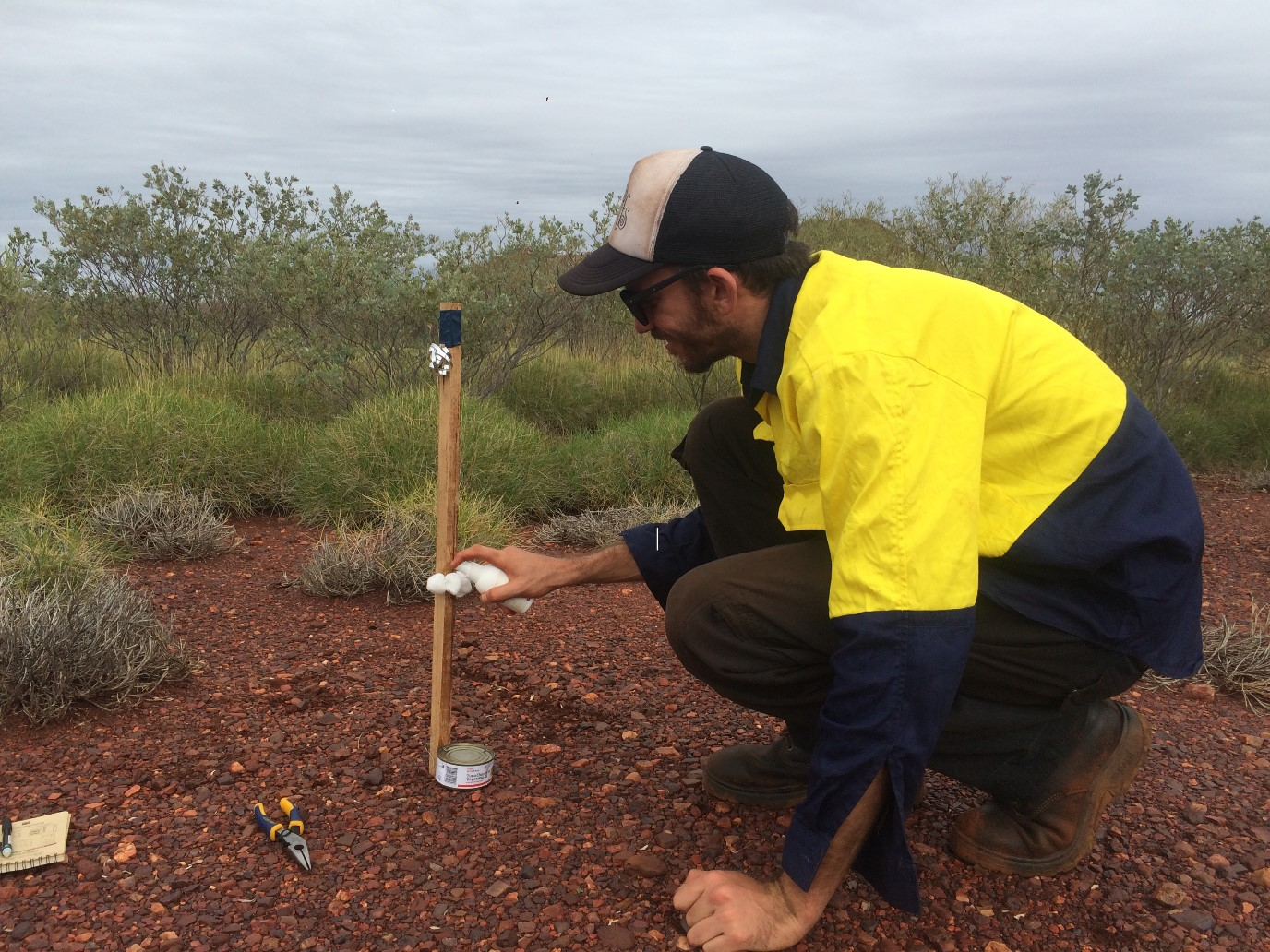 Will baiting benefit northern quolls in the Pilbara?