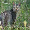 Feral cat control for threatened species in Queensland