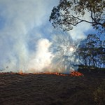 Indigenous aspirations and capacity for bushfire response