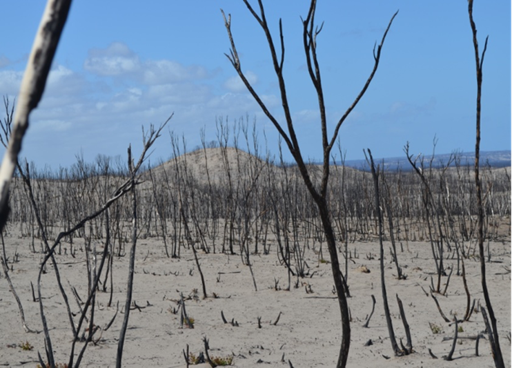 Kangaroo Island, a month after the fire. Image: Chris Dickman