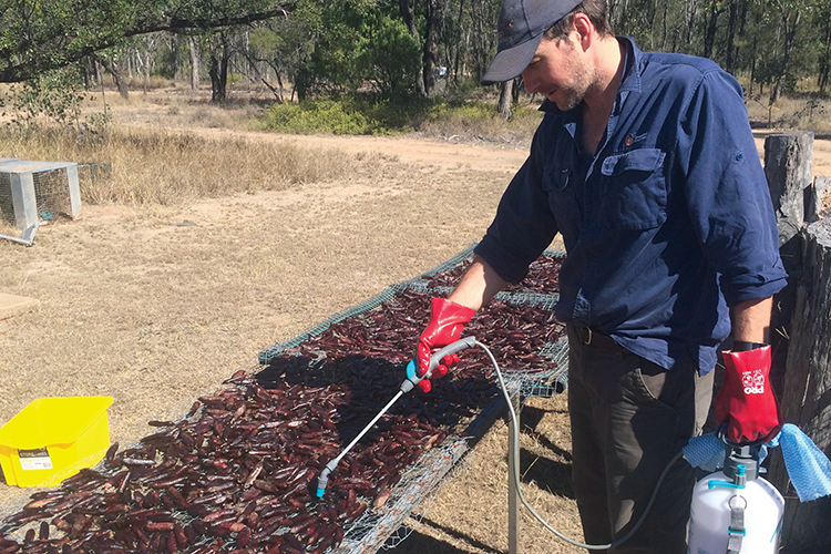 Improving feral cat control - Baiting trials at Taunton National Park