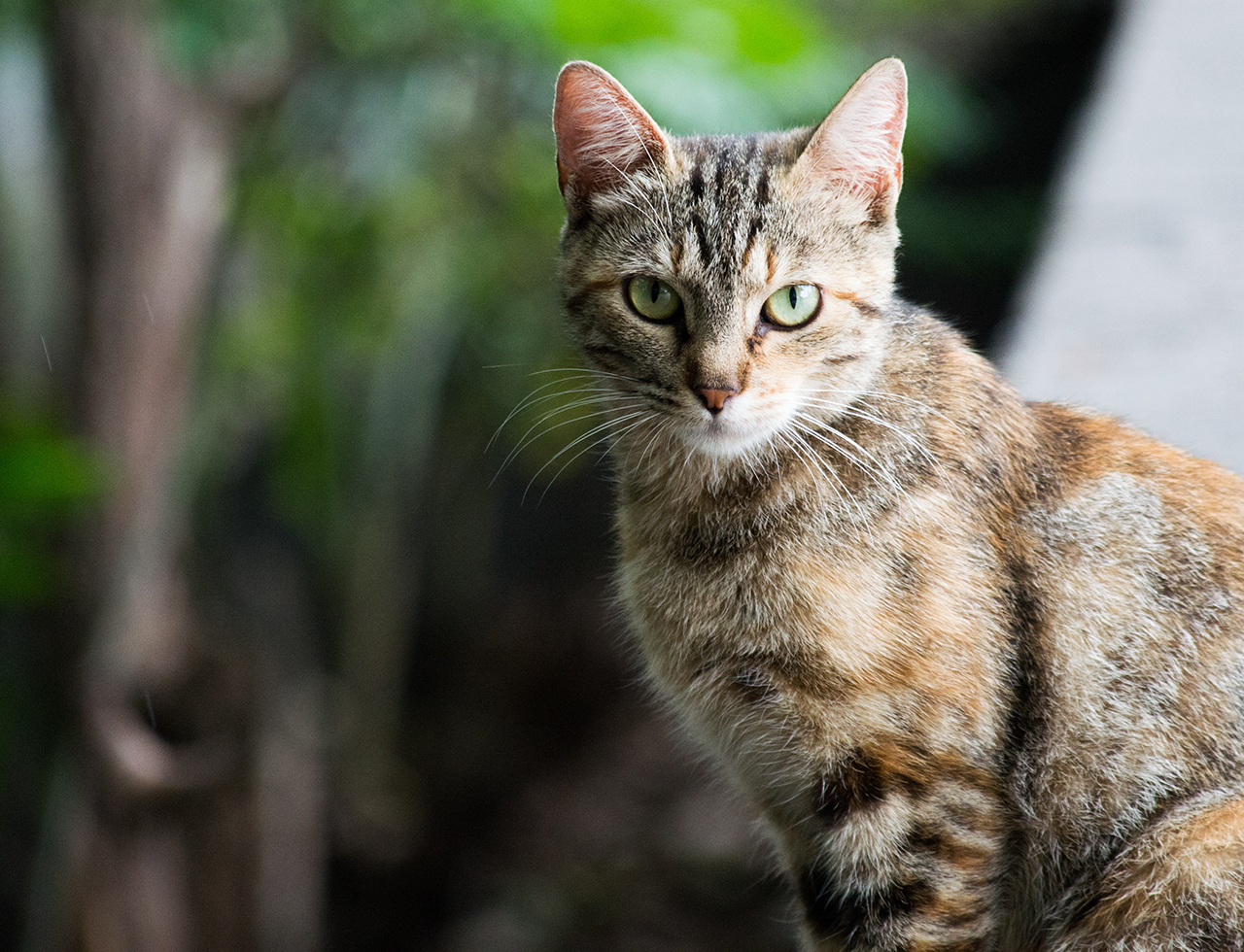 Cat diseases have $6 billion impact on human health in Australia
