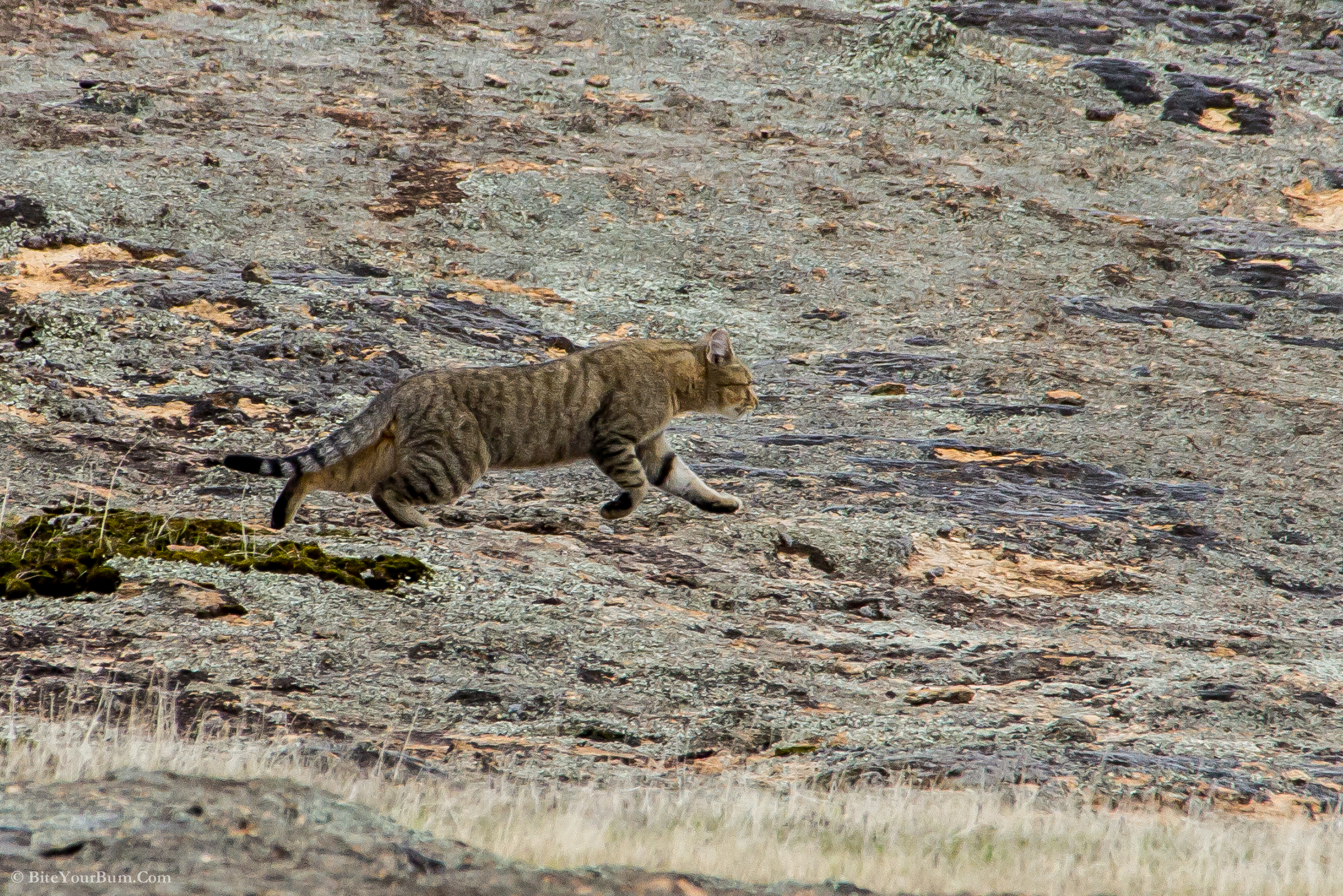 TSR contributes to Feral Cat Taskforce