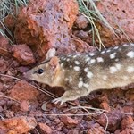 Better offsets for threatened species