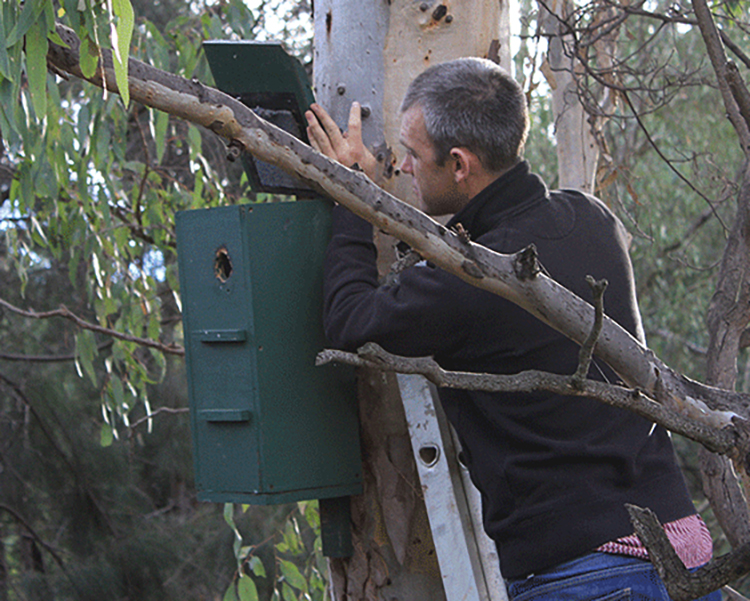 Nest box offset fails to tick the box