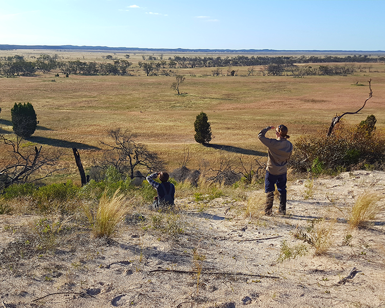 Why Buloke woodland species are failing to regenerate