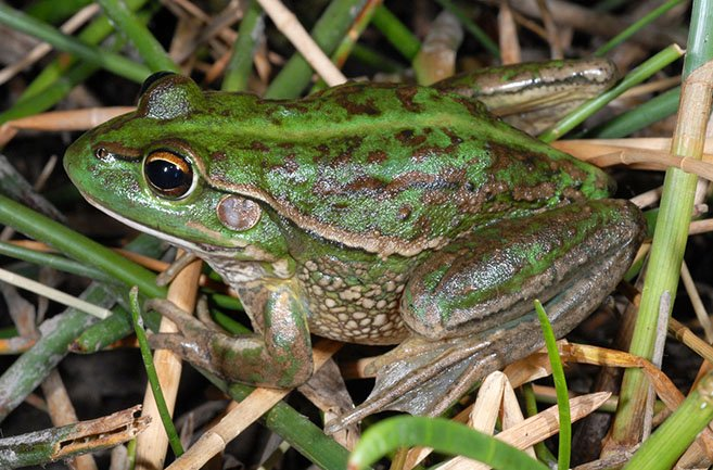 PhD Opportunity - ecological requirements of frogs in human modified landscapes