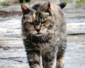 Rabbits off the menu for feral cats