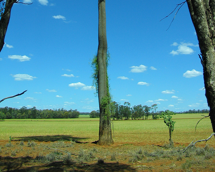 Lost with the brigalow - Rediscovering something lost in order to save what still exists