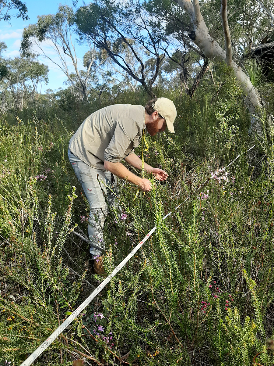 Macquarie University PhD student Tom Pyne undertaking a flora survey in Ku-Ring-Gai National Park NSW. Credit Rachel Gallagher