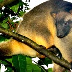 Improving threatened species monitoring