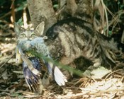 New research: Cats kill more than one million Australian birds per day