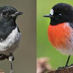Evidence-based management protocols for recovery of multiple threatened woodland birds