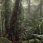 Survival and recovery of threatened animal species in fire-affected World Heritage Areas (Gondwana Rainforests focus)
