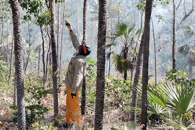 Using fire to reduce cat impacts on the Tiwi Islands
