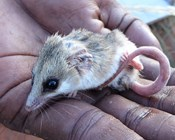 Indigenous action vital for Australia's threatened species