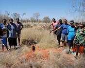 Indigenous land manager profile: Kanyirninpa Jukurrpa and Martu people