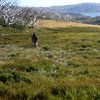 Supporting alpine peatland recovery by prioritising action on threats