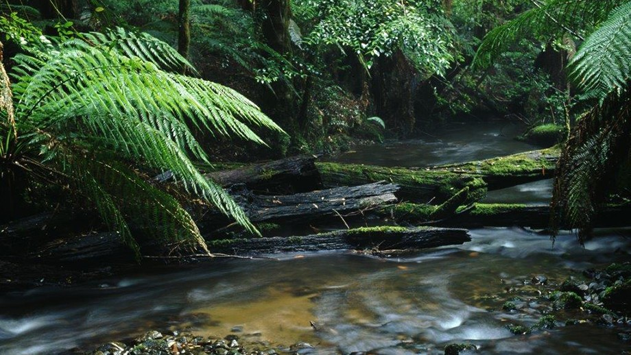 Vic forests worth more as national park than timber