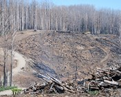 Forest condition before a fire influences recovery